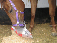 Horse Feed Pellets Analysis and Manufacturing